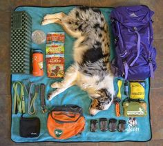Dog gear for hiking and camping with your dog. Hiking Dogs, Camping And Hiking, Camping Hacks, Tent Camping, Camping Gear, Camping Dogs, Backpacking With Dogs, Camping Supplies, Dog Supplies