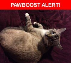 Please spread the word! Zig was last seen in Austin, TX 78750.    Nearest Address: 9415 McNeil Drive, Austin, TX, United States