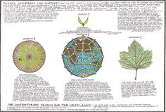 "Goethe spent years with writing the Metamorphosis of Plants (1790) and supervising its translation. ""I am beginning to grow aware of the essential form with which, as it were, Nature always plays, and from which she produces her great variety. Had I the time in this brief span of life I am confident I could extend it to all the realms of Nature – the whole realm."""