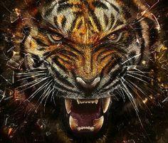 Custodia cover case tigre ruggito disegno wild per alcatel pop Tier Wallpaper, Cat Wallpaper, Animal Wallpaper, Mobile Wallpaper, Wildlife Wallpaper, Amazing Wallpaper, Photo Wallpaper, Tiger Images, Tiger Pictures
