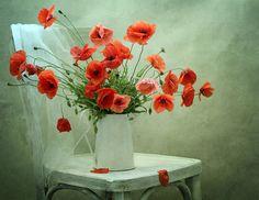 red poppies / czerwone maki for the entryway