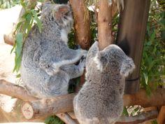 Mama and Baby SD Zoo