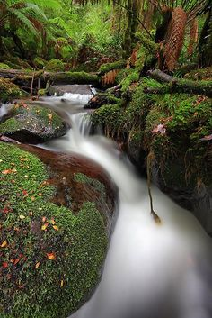 Cement Creek near Warburton, Victoria, Australia.