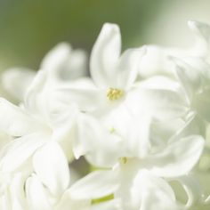 White flowers. #Spring #Beautiful