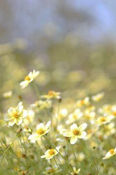 """I don't feel any pain, a little fall of rain, can hardly hurt me now...and rain will make the flowers grow."" - A Little Fall Of Rain Songtext,  Les Miserables (Image Via @Lara Elliott )"