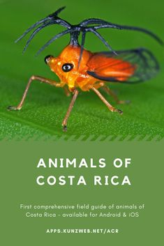Animals of Costa Rica App Amphibians, Reptiles, Mammals, Marine Fish, Field Guide, Image Shows, Spiders, Costa Rica, Insects
