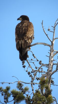This beauty was outside our office windows at Signal Mountain Lodge!