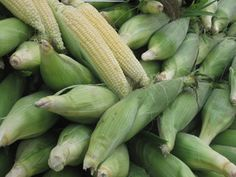 Freezing Corn on the Cob for Year Round Delight