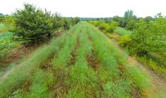 Permaculture Profiles In Use New-Forest-Farm-Drone-Fly-By-crop