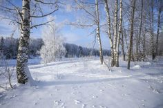 Зимний пейзаж на берегу канала имени Москвы.Россия.(фото №15)