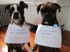 30 Naughtiest Dogs: You'll Crack Up When You Find Out What They Did