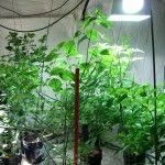 indoor vegetable garden UV lighting