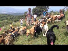 This Territory is a Huge No-Kill Shelter Where You Can Hike With the Dogs for Free | Canine Distractions