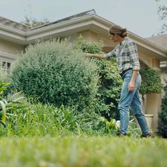 Hedges, Garden Landscaping, Home And Garden, Design Inspiration, Exterior, Landscape, Donald Trump, Gardening, News
