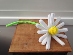 pipe cleaner chamomile