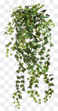 vine, Vine Clipart, Vine, Vine Leaves PNG Image and Clipart Tree Photoshop, Photoshop Images, Photoshop Design, Architecture Collage, Landscape Architecture, Landscape Elements, Landscape Design, Photoshop Elementos, Plant Texture
