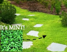 Garden Barefoot With These 5 Amazing Living Ground Covers - MIgardener Deciding what ground covers to use in your space can be an intimidateing choice. Here are MIgardener's top five favorite ground covers. Garden Paths, Lawn And Garden, Moss Garden, Landscape Design, Garden Design, Covered Garden, Front Yard Landscaping, Landscaping Ideas, Inexpensive Landscaping
