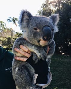 Shared by ⚜. Find images and videos about cute, adorable and animal on We Heart It - the app to get lost in what you love. how cute are the koala bears Cute Creatures, Beautiful Creatures, Animals Beautiful, Majestic Animals, Cute Baby Animals, Animals And Pets, Funny Animals, Wild Animals, What Kind Of Dog