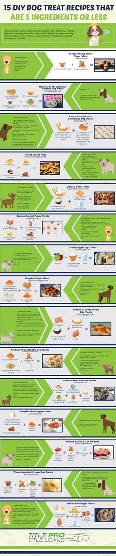 You can't expect your dog to stay healthy and happy if you don't feed it properly. This infographic from Title Pro has 15 dog treat recipes you should try