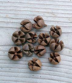 Natúr, kis méretű korona termés az őszi dekorációdhoz.
