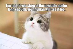 Click to see the latest hilarious cat memes that are doing the rounds on the internet.