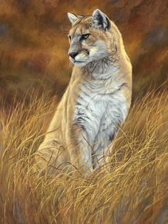Mountain Lion Poster By Lucie Bilodeau