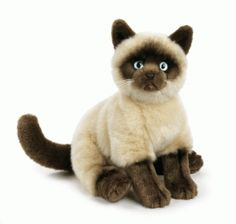 Webkinz signature Siamese cat. I totally recommend it!!!!