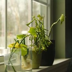 11 Signs of an Unhappy Houseplant (and How You Can Help)
