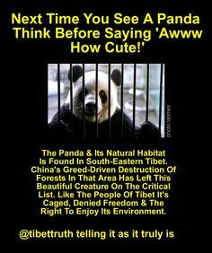 Greed, Cute Photos, Tibet, Embedded Image Permalink, Animal Kingdom, Habitats, Creatures, Sayings, Beautiful