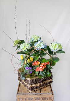 HEPATICA plant basket arrangement (hydrangea, tulip, begonia, african violet, pussy willow, curly willow) – photo: QUARTER design studio