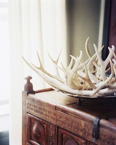 Decor Photo - A collection of antlers