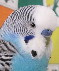 reminds me of my first pet bird!