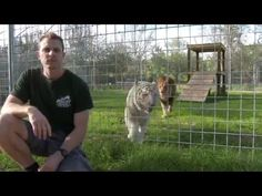 Watch What Happens When You Turn Your Back On BIG Cats!!#Amazing #WOW #Tricks #Cats #BigCat #Lion #Tiger