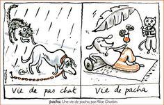 Alice Charbin - Vie de pacha