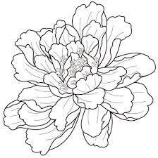 Image result for 牡丹
