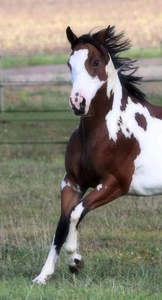 Mom says new Clorox 2 really brings the white out. But I say I smell like the neighbor's pool. #SaddlesForSale #Horses #MySaddleTrader