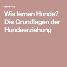 Wie lernen Hunde? Die Grundlagen der Hundeerziehung Westies, Beagles, All Dogs, Dory, Dog Owners, Dog Love, Dog Training, New Baby Products, Labrador