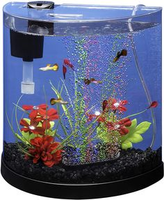 This post is about the Best Tank Size For Betta Fish. A good fish tank size gives your betta enough space to play, mate and relieve stress for their health. Kids Aquarium, Betta Aquarium, Aquarium Kit, Glass Aquarium, Planted Aquarium, Fish Tank For Kids, Cool Fish Tanks, Fish Tank Sizes, Betta Fish Bowl