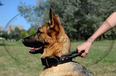 Strong #Leather #Collar for Reliable Pet Control $39.90 | www.all-about-german-shepherd-dog-breed.com