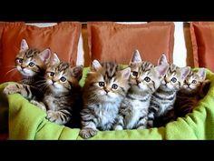 ▶ Chorus Line of Kittens : New generation - YouTube