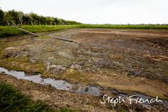 Cow manure held in slurry pit for spreading at Helen Browning'g pig farm, Wiltshire