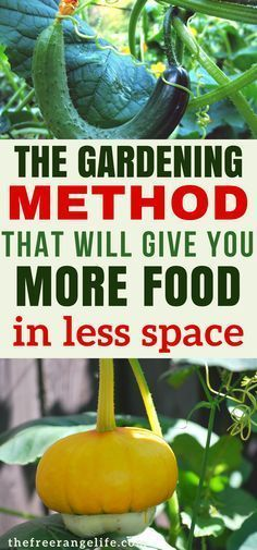 Vertical Gardens: Learn all about how to grow vertically in your vegetable garden! Grow more food in less space   Organic Gardening Tips   How to Grow   Gardening for Beginners