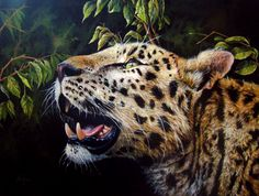 "Wildlife Art ""Hope"": Realistic Acrylic painting of a Leopard portrait. By Dominique Wilkins Realistic Paintings, Great Paintings, Animal Paintings, Animal Drawings, Hope Painting, Painting Fur, Africa Painting, Watercolor Video, Photorealism"