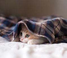 The Daily Cat (@catpicaday)   Twitter