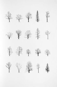 """Katie Holten has made a series of tree drawings. In 2015 she created a """"Tree Alphabet"""" and published the book """"About Trees"""". A series of tree drawings was commissioned by the Zentrum Paul Klee for the group exhibition """"About Trees"""" in Drawn Art, Hand Drawn, Art Plastique, Painting & Drawing, Drawing Trees, Life Drawing, Drawing Drawing, Drawing Sketches, Tatoos"""