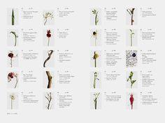 ENCYCLOPEDIA OF FLOWERS by Kenya Hara