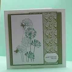 Stampendous agapanthus cluster