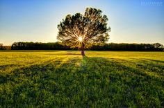 The image for nonprofit. Nature's Green is Gold - #2 by KellyShipp, via Flickr