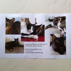 If you like to adopt or support a cat, do check out: www.facebook.com/lifelinesg  or email to: lifelinesg@gmail.com  Thank You very much!!