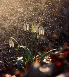 Spring is coming - null